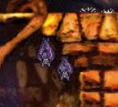 Bats Hanging (C1 Living COB)