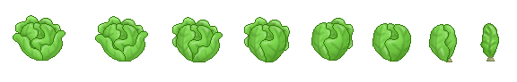 Lettuce as the Leaves Go (Click to enlarge)