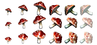Redcap Mushrooms (Click to enlarge)