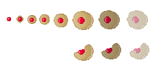 Dulcian Cookies (Click to enlarge)
