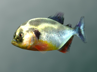 Piranha Closeup (Ingame Angle) (Image Credit: Doringo)