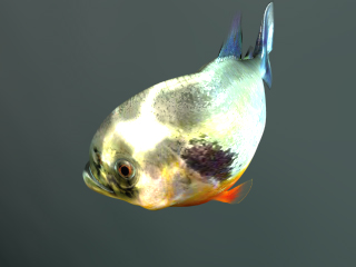 Piranha Closeup (From Above) (Promos)